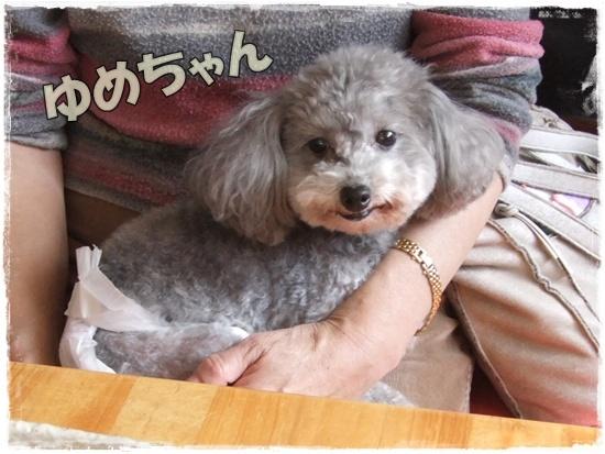 2015_1019naoとaiとtitis0066