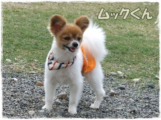 2015_1019naoとaiとtitis0071