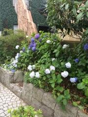 高円寺38