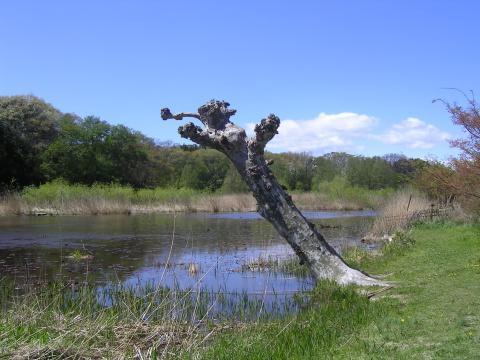 zone tree.JPG