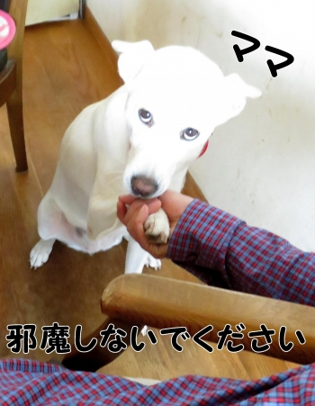 IMG_1540-001_convert_20150926213503.jpg
