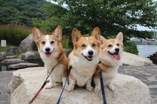中央公園 2015-8-16-1