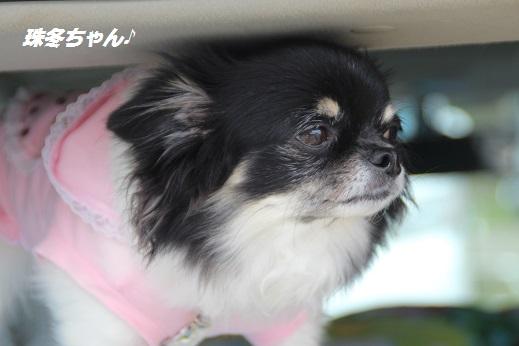 動愛園 2015-9-27-3