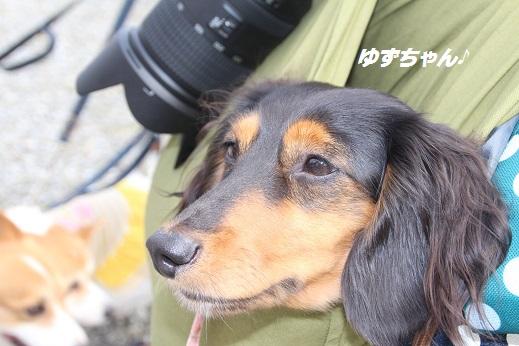 動愛園 2015-9-27-5