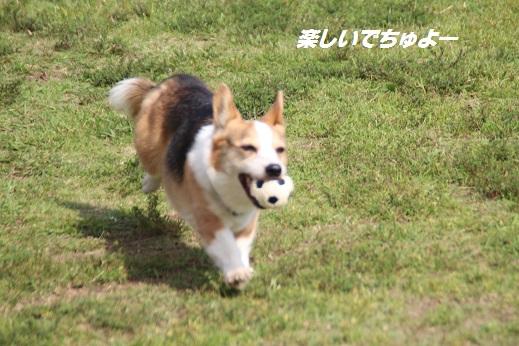 ふらってぃーさん1 2015-9-27-1