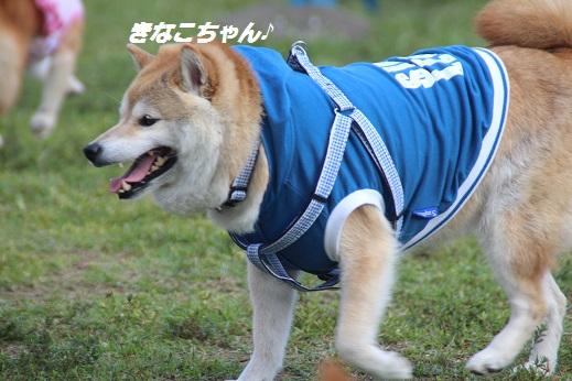 ふらってぃーさん1 2015-9-27-8