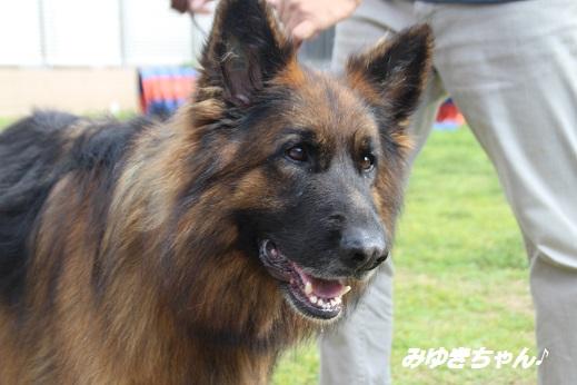 ふらってぃーさん1 2015-9-27-10