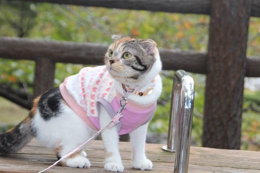小倉城 2015-10-11-4