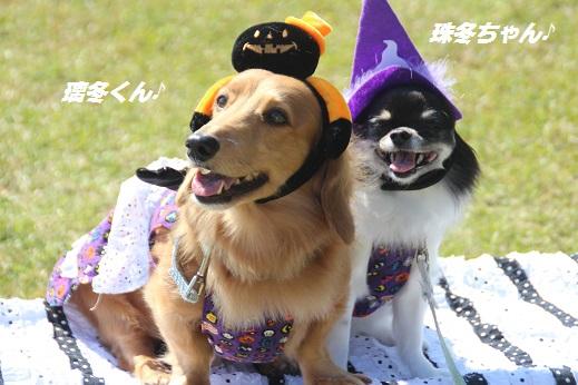 吉野ヶ里1 2015-10-17-9