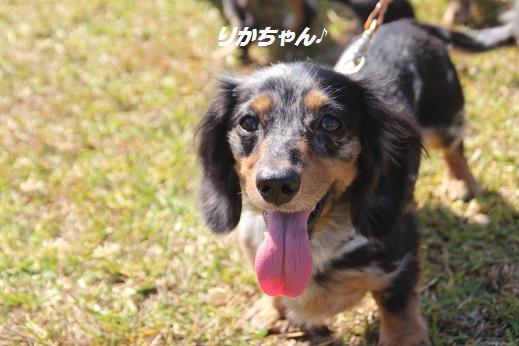 吉野ヶ里2 2015-10-17-4