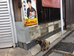 吉武商店:猫