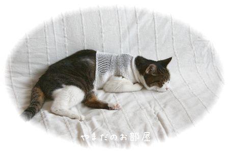 2015.8.26のスーちゃん