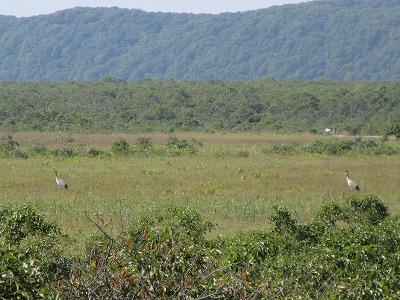 湿原ウォークコース丹頂