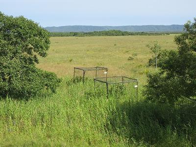 湿原ウォークコース籠