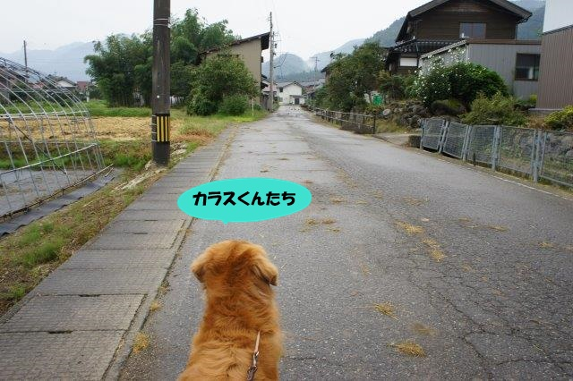 DSC07734.jpg