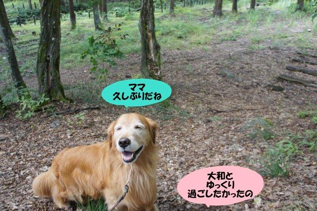 DSC07932.jpg