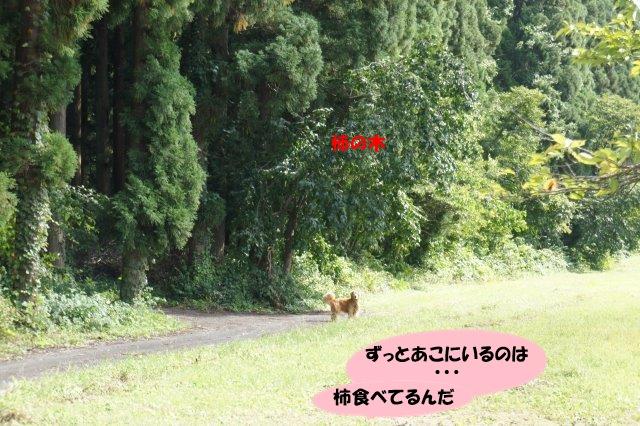 DSC07944.jpg