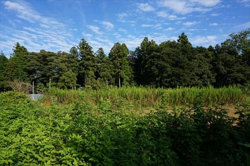 6神社の森