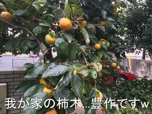 20151017 柿の木