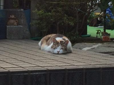 ネコ 写真