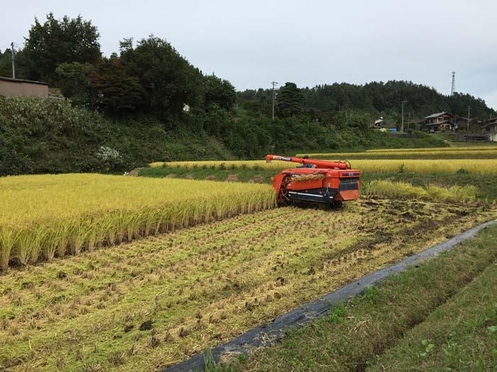 2015 農作業 秋 コシヒカリ 稲刈り