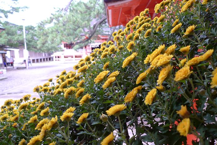出雲の神社巡り  日御碕神社  10