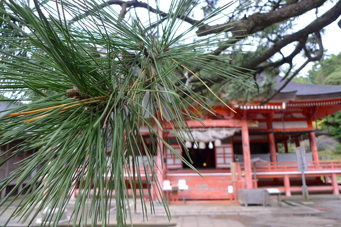 出雲の神社巡り  日御碕神社  18