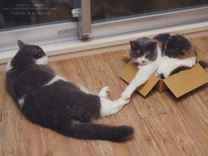ゆきち 箱こまち