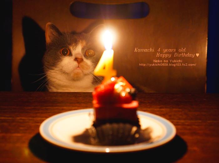 こまち4歳の誕生日