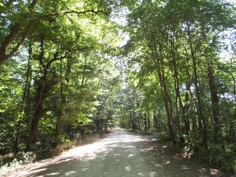 ホーエンノイフェンの森