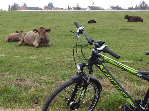 牛ともいっしょ