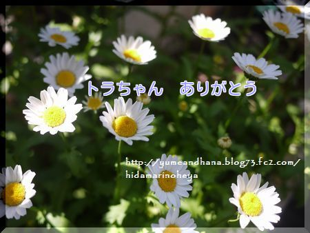 001-3PjhD2D1mwO36lp1445350565_1445350792.jpg