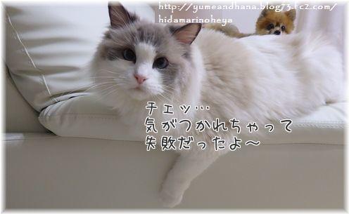 001-6fNTJbpdoSzDhDb1441109521_1441109593.jpg