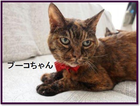 001-プーコちゃん19才150930