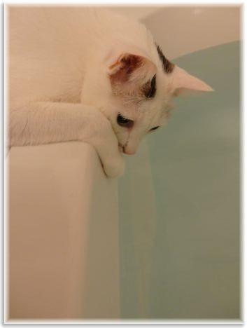 001-ココお風呂150924-2157