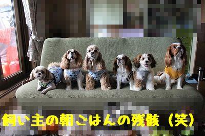 里帰り 1 (5)
