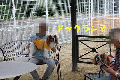 里帰り 1 (17)