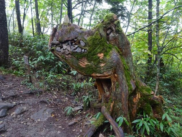 9月27日 ゴジラみたいな木