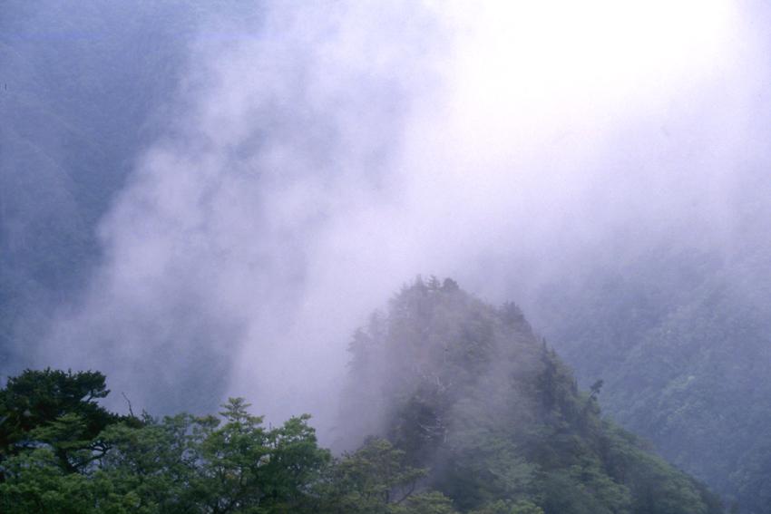 霧の大台ケ原02