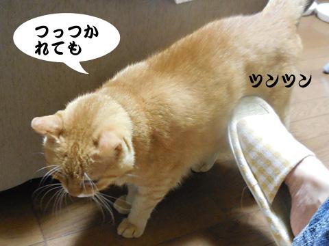 15_08_21_2.jpg