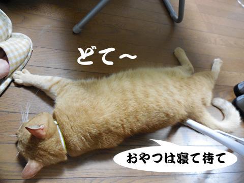 15_08_21_5.jpg