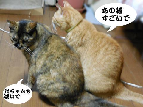 15_09_09_1.jpg