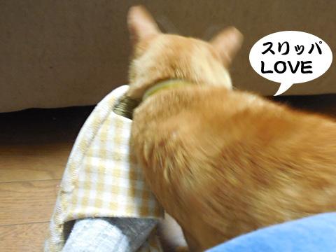 15_09_09_2.jpg
