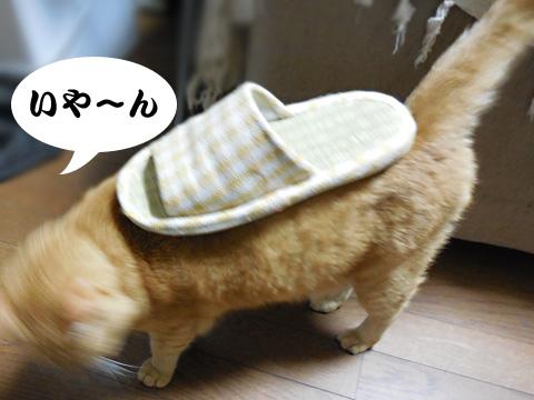 15_09_09_4.jpg
