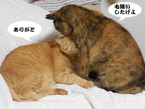 15_09_16_1.jpg