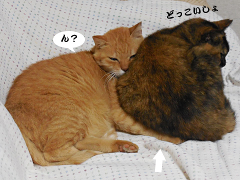 15_09_16_2.jpg