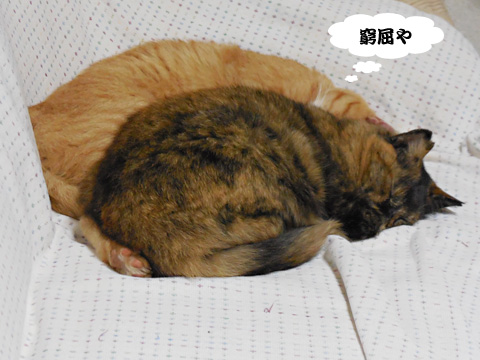 15_09_16_4.jpg