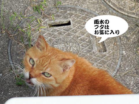 15_09_22_3.jpg