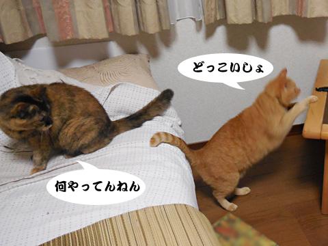 15_09_24_4.jpg