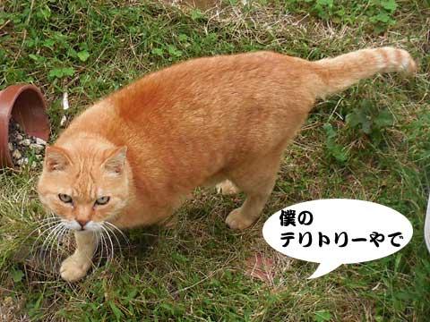 15_10_13_3.jpg